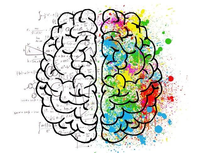 Cerveau gauche cerveau droit instinct maîtrise Bruce Lee